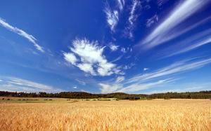 BARLEY FIELD © Anteroxx | Dreamstime.com