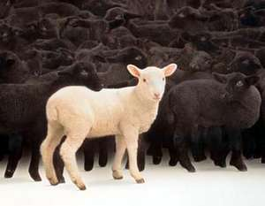 LAMBS - unknown